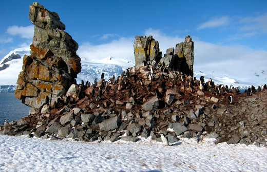 A chinstrap penguin colony.