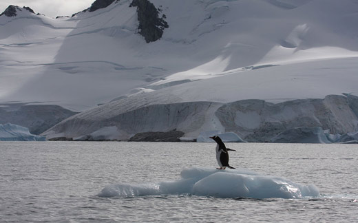 A penguin sitting on an iceberg.