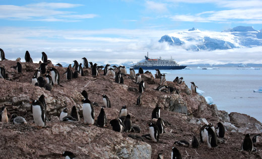 A penguin colony overlooking our ship.