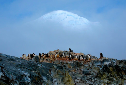 A penguin colony blow an ice-covered mountain.