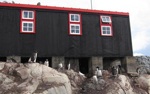 Penguins nesting under the base.