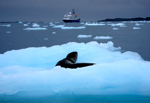 A leopard seal on an iceberg.