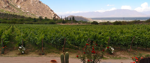 Grape vines at a winery near Cafayate, Argentina.
