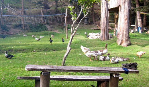 Lots of ducks, chickens, turkies and geese at our campsite.