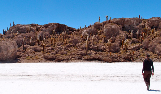 An island in the salt flats, covered with cacti.