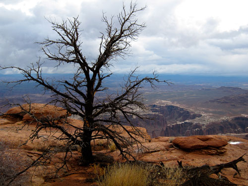 Dark skys over the Canyonlands.