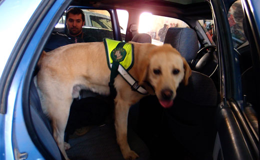 A dog at the Chilean border runs through our car.