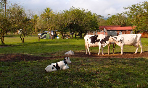 Our campground on a farm near the Arenal volcano.