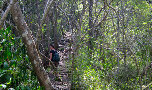 The trail we hiked in the Children's Rainforest near Santa Elena.