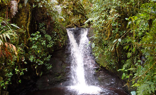 The first waterfall we encounter on our hike in the cloud forest.