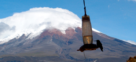 Volcan Cotopaxi and the world's highest-elevation humming bird.