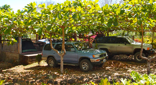 Our shaded parking spots at Finca Magdelena.