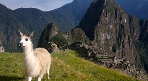 A llama with the ruins in the background.