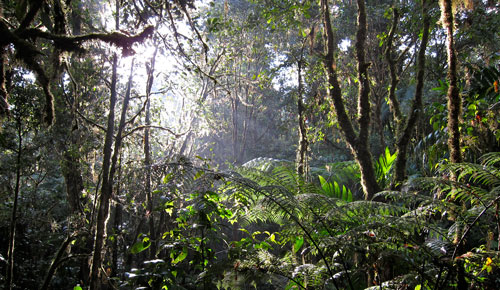The light shines through the jungley forest.