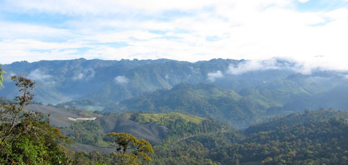 A view of the Guatemalan cloud forest.