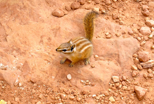 A chipmunk joins us for lunch.