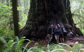 The three of us in front of a big redwood tree.